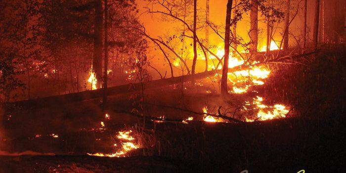 Wildfire Prevention In California